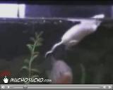 Mouse vs Piranha